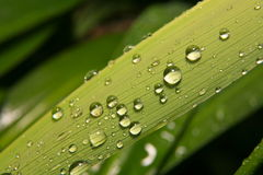 Water drops on grass blade Royalty Free Stock Photos