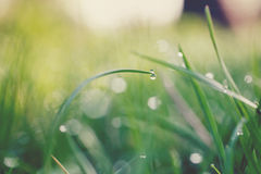 Water drops on grass Stock Photography
