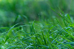 Water Drops On Grass Stock Image
