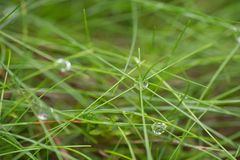 Water drops on grass in fall forest Stock Photos