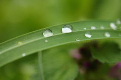 Water drops on grass Stock Images
