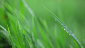 Water drops on grass stock video