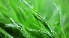 Water drops on grass stock footage