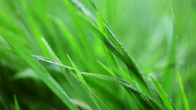 Water drops on grass stock video footage