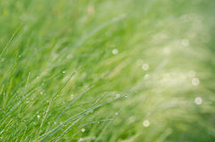 Water drops on grass selective focus Stock Photography