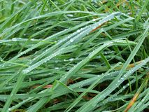 Water drops on grass, South Bohemia Stock Photos