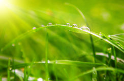 Water drops on grass. Stock Photo