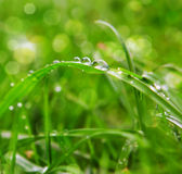 Water drops on grass. Stock Photos