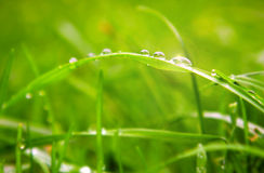 Water drops on grass. Royalty Free Stock Image