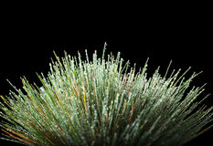 Water drops on grass tussock Stock Image