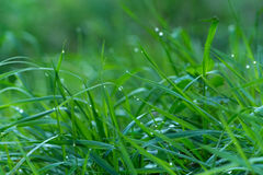 Water Drops On Grass Royalty Free Stock Photography