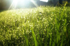 Water drops on the greem grass under the rays. Water drops on the greem grass under the sun rays Stock Images