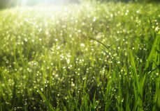 Water drops at the greem grass under sun rays. Water drops at the greem grass under the sun rays Stock Photo