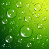 Water drops on green. Background Stock Photo