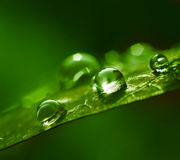 Water drops green abstract Royalty Free Stock Photos