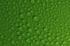 Water drops on green background texture. Ecology for design Stock Photo