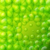Water drops on green background. Vector water drops on lime green background Stock Photography