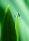 Water drops on green grass. Clear dew water drops on green grass Royalty Free Stock Photography