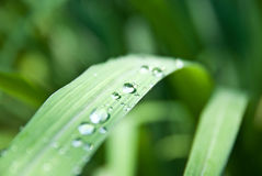 Water drops on green grass Stock Photography