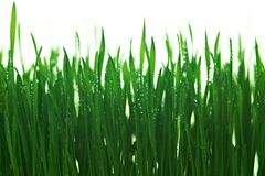 Water drops on the green grass Royalty Free Stock Images