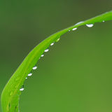 Water drops on the green grass Stock Images