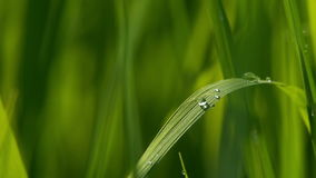 Water drops stock video footage