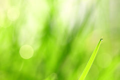 Water drops on the green grass blade Royalty Free Stock Images