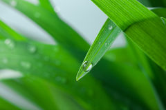 Water Drops on the Green Grass  Close-Up Stock Photo