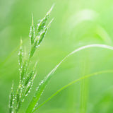 Water drops on the green grass Stock Image