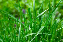 Water drops on the green grass Stock Photo