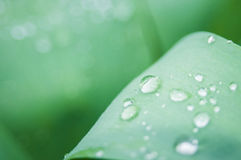 Water drops on the green grass. Composition with water drops on the green grass Royalty Free Stock Images