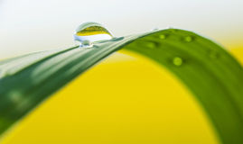 Water drops on green grass leaf Stock Photos