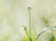 Water drops on the green grass Stock Photography