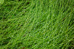 Water Drops on the Green Grass. Nature abstract background Royalty Free Stock Image