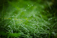 Water Drops on the Green Grass. Nature abstract background. Sele Royalty Free Stock Images