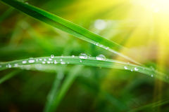 Water Drops on the Green Grass. Nature abstract background. Sele Stock Photos