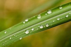 Water drops on green grass Royalty Free Stock Photo