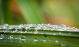 Water drops on the green grass Royalty Free Stock Photo