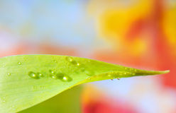 Water drops on the green grass. In spring time Royalty Free Stock Photo
