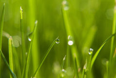 Water drops on green grass Royalty Free Stock Images