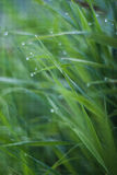 Water drops on the green grass. Summer Stock Photography