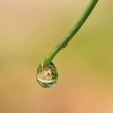 Water drops on the green grass Royalty Free Stock Photos