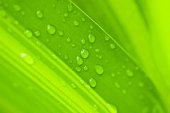 Water drops on green leaf Royalty Free Stock Images