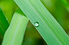 Water drops on green leaf Royalty Free Stock Image