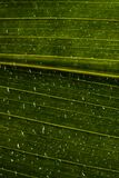 Water drops on green leaf Stock Image