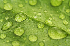 Water drops on a green leaf. Close up stock photos