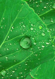 Water drops on green leaf Royalty Free Stock Photos