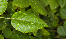 Water drops Royalty Free Stock Image