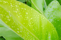 Water drops on a green leaf Stock Photography