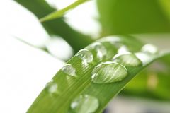 Water drops on green leaf. Against blurred background stock photos